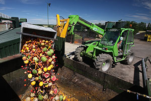 Vegetables going into the Anaerobic Digester